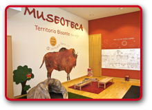 Museoteca